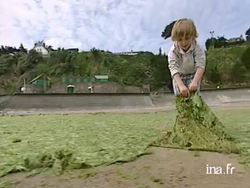 Les algues vertes en Bretagne |