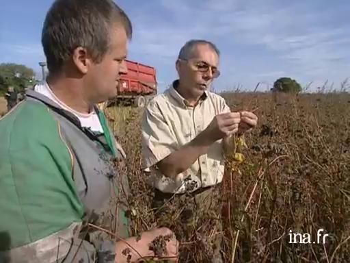 La récolte du blé noir en Ille et Vilaine |
