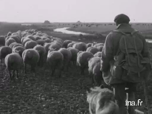 Les bergers au Mont Saint-Michel