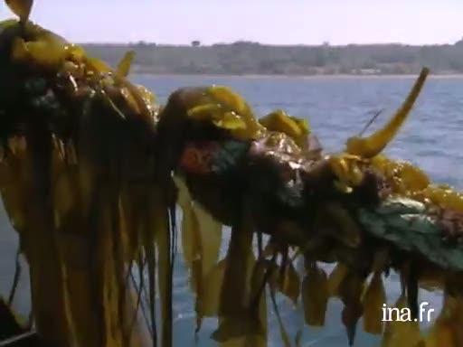 Entreprise de culture des algues  