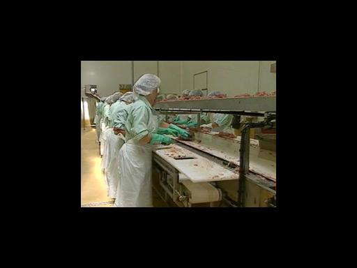 Témoignage d'une ouvrière travaillant dans une conserverie de poissons 2/2 |